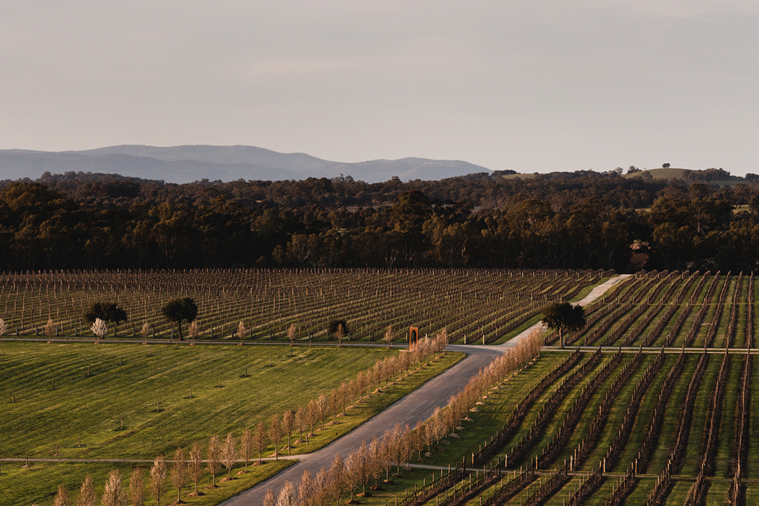 Spectular vineyards at Mitchelton Winery